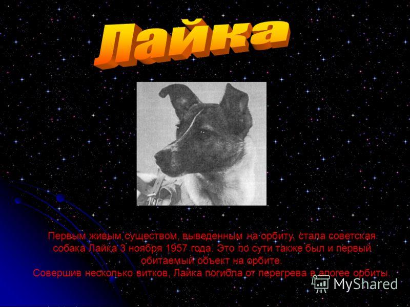 Первым живым существом, выведенным на орбиту, стала советская собака Лайка 3 ноября 1957 года. Это по сути также был и первый обитаемый объект на орбите. Совершив несколько витков, Лайка погибла от перегрева в апогее орбиты.
