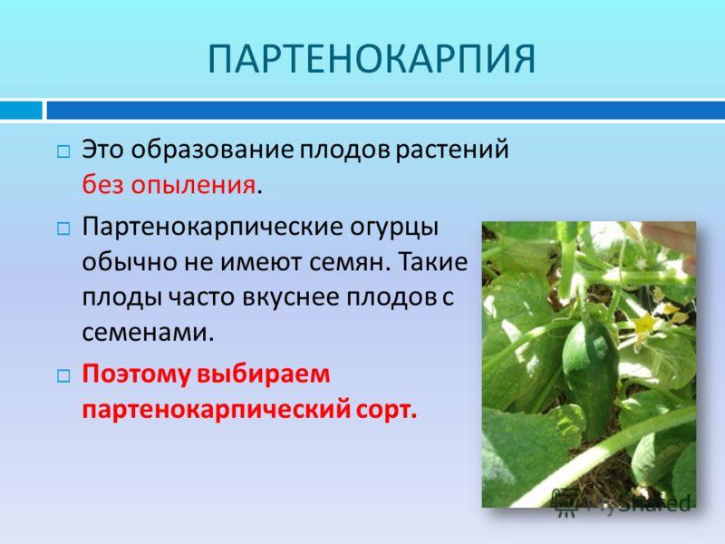 ПАРТЕНОКАРПИЯ Это образование плодов растений без опыления. Партенокарпические огурцы обычно не имеют семян. Такие плоды часто вкуснее плодов с семенами. Поэтому выбираем партенокарпический сорт.