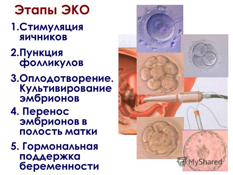 Этапы ЭКО 1.Стимуляция яичников 2.Пункция фолликулов 4. Перенос эмбрионов в полость матки 5. Гормональная поддержка беременности 3.Оплодотворение. Культивирование эмбрионов
