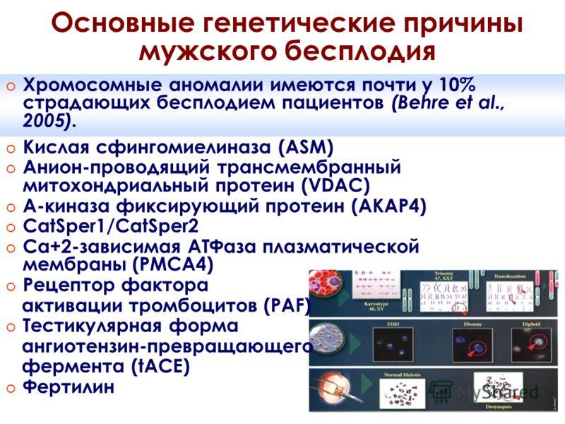 Основные генетические причины мужского бесплодия o Кислая сфингомиелиназа (ASM) o Анион-проводящий трансмембранный митохондриальный протеин (VDAC) o А-киназа фиксирующий протеин (AKAP4) o CatSper1/CatSper2 o Ca+2-зависимая АТФаза плазматической мембр