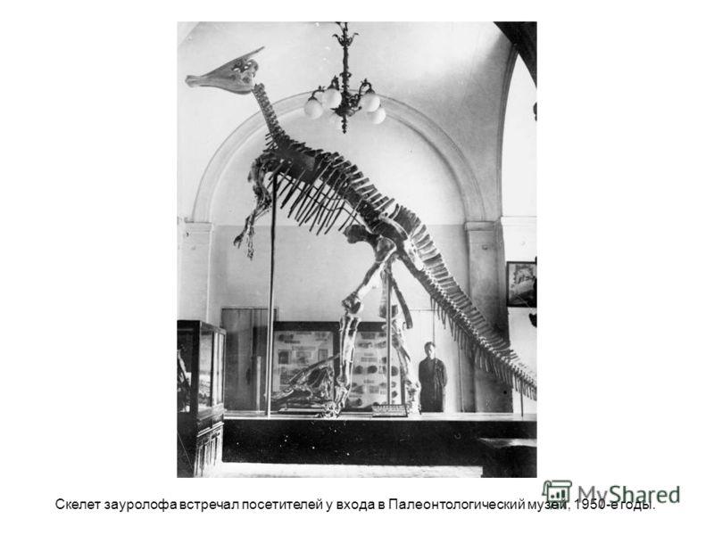 Скелет зауролофа встречал посетителей у входа в Палеонтологический музей, 1950-е годы.