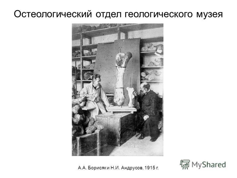 А.А. Борисяк и Н.И. Андрусов, 1915 г. Остеологический отдел геологического музея
