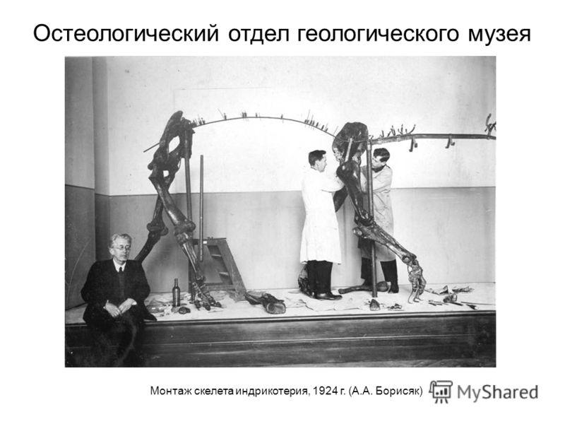 Монтаж скелета индрикотерия, 1924 г. (А.А. Борисяк) Остеологический отдел геологического музея