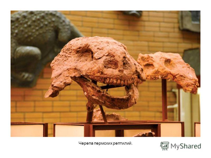 Черепа пермских рептилий.