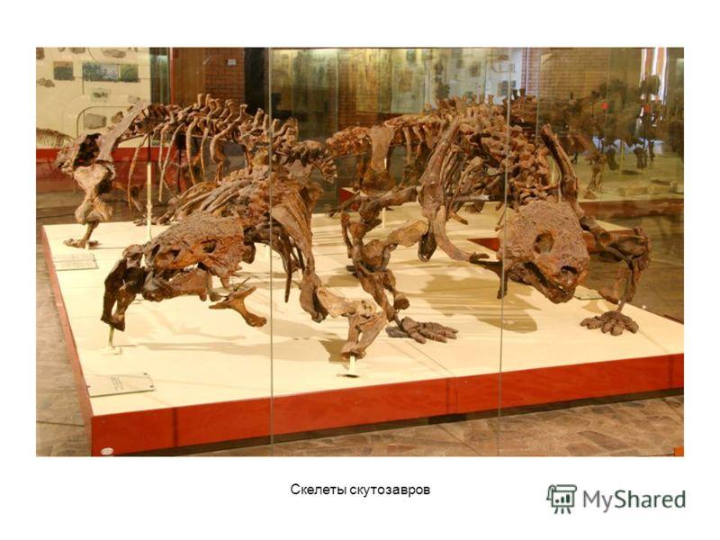 Скелеты скутозавров