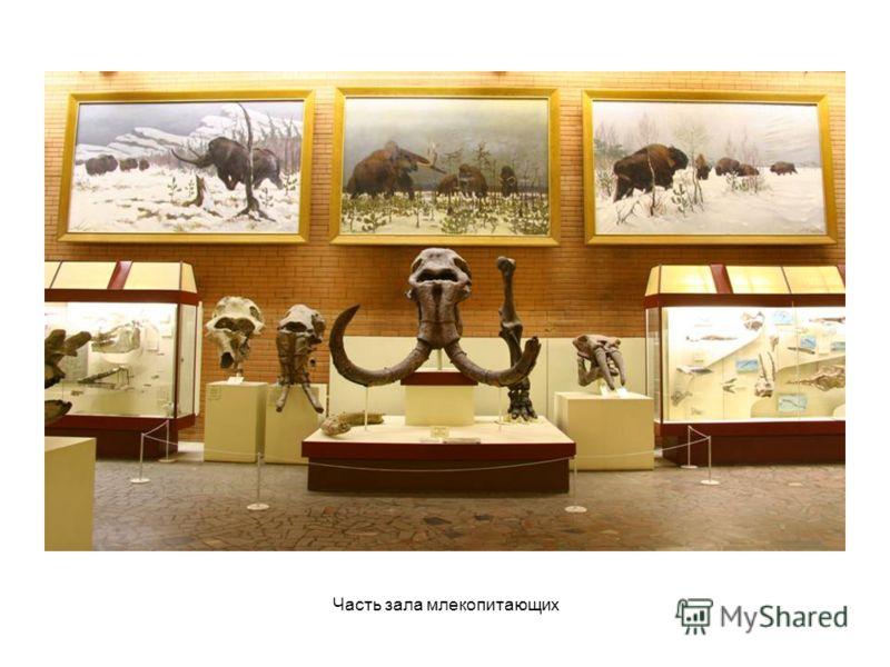 Часть зала млекопитающих