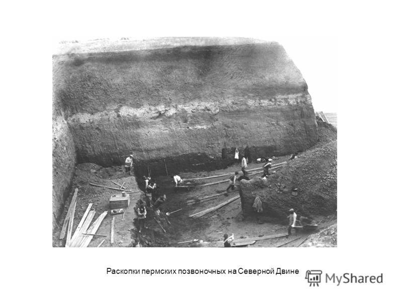 Раскопки пермских позвоночных на Северной Двине