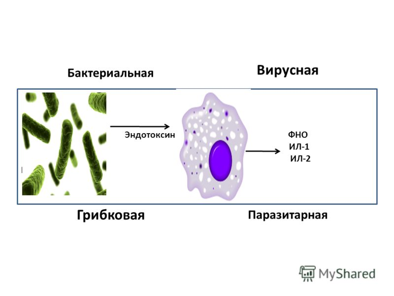 ИНФЕКЦИЯ Бактериальная Вирусная Грибковая Паразитарная Эндотоксин ФНО ИЛ-1 ИЛ-2 ИЛ-6