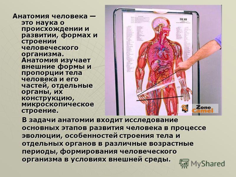 Анатомия человека это наука о происхождении и развитии, формах и строении человеческого организма. Анатомия изучает внешние формы и пропорции тела человека и его частей, отдельные органы, их конструкцию, микроскопическое строение. В задачи анатомии в