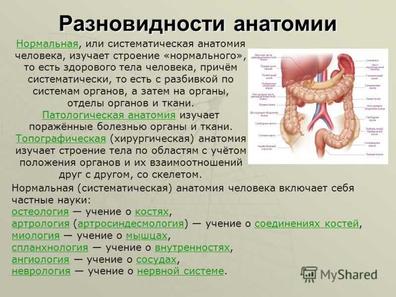 Разновидности анатомии НормальнаяНормальная, или систематическая анатомия человека, изучает строение «нормального», то есть здорового тела человека, причём систематически, то есть с разбивкой по системам органов, а затем на органы, отделы органов и т