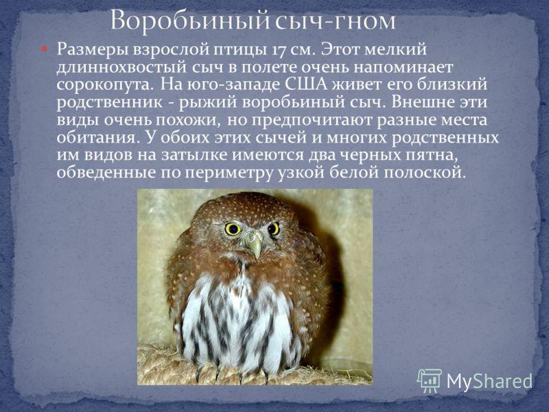 Размеры взрослой птицы 17-19 см. Этот сыч довольно доверчив и внешне представляет собой уменьшенную копию обыкновенного мохноногого сыча, широко распространенного в Северной Европе, Сибири, на Аляске и в Канаде. Ареалы этих видов перекрываются на юге