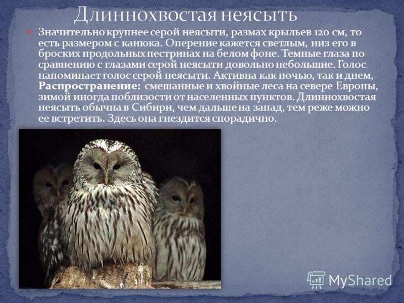 Самая крупная птица из европейских Совообразных, размах крыльев свыше 170 см. Крупные «уши», ярко-оранжевые глаза. Распространение: везде, где его не преследует человек, ландшафт не разделен проволочными сетками и где достаточно пищи и скал с площадк