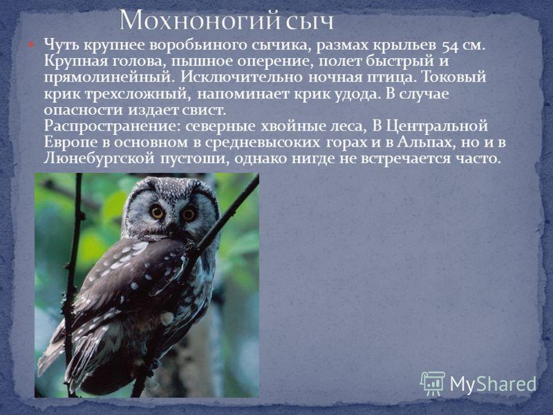 : Размеры взрослой птицы 4353 см. Благодаря своему обширному ареалу и весьма крупным размером виргинский филин попадается на глаза довольно часто. Этот вид состоит в близком родстве с обыкновенным филином, населяющим Евразию. Оба вида распадаются на