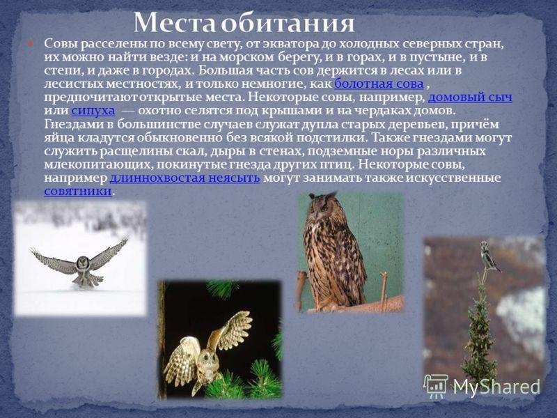 Некоторые совы охотятся днем, как, например, из российских сов белая сова, воробьиный сычик и ястребиная сова, некоторые другие, как домовый сыч, охотятся одинаково как днем, так и ночью. Однако большинство сов настоящие ночные птицы, и многие из них