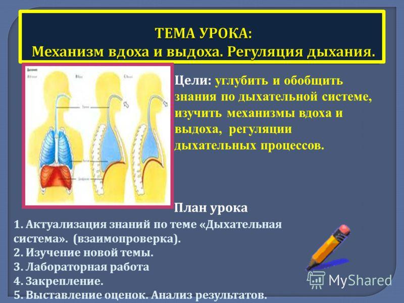Цели : углубить и обобщить знания по дыхательной системе, изучить механизмы вдоха и выдоха, регуляции дыхательных процессов. План урока 1. Актуализация знаний по теме « Дыхательная система ». ( взаимопроверка ). 2. Изучение новой темы. 3. Лабораторна