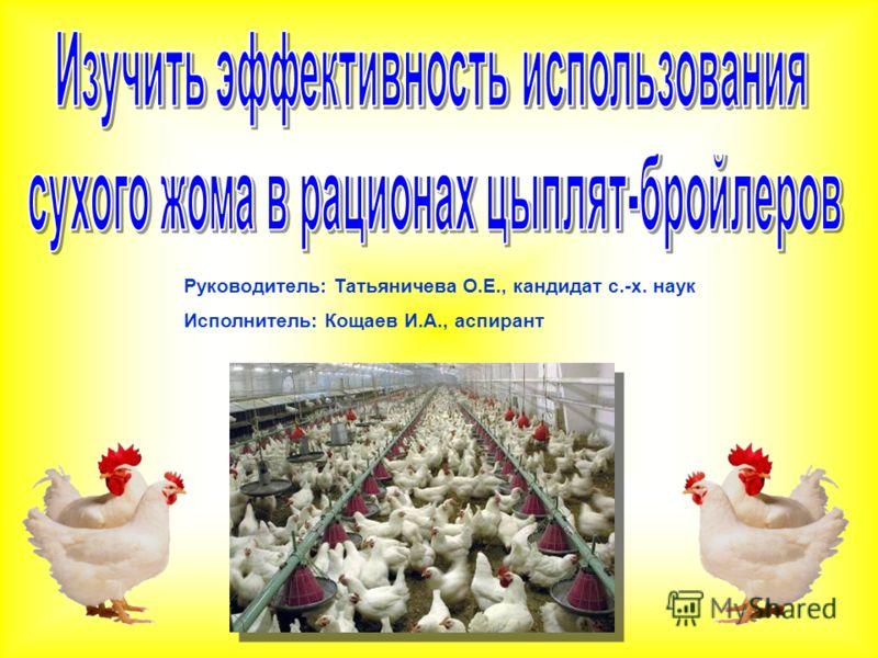 Руководитель: Татьяничева О.Е., кандидат с.-х. наук Исполнитель: Кощаев И.А., аспирант