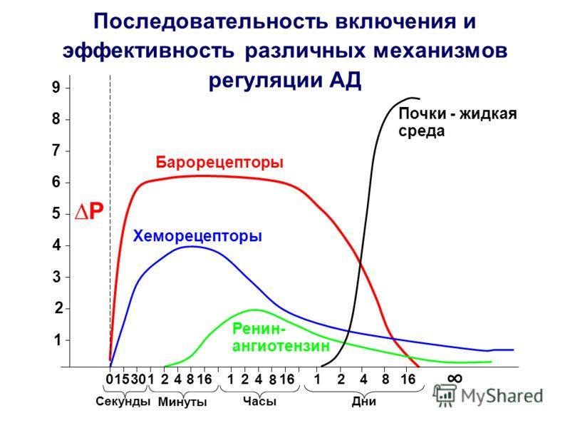 Последовательность включения и эффективность различных механизмов регуляции АД Р 1 2 3 4 5 6 7 8 9 Барорецепторы 0 15 301 24816 Секунды Минуты 124 8 16 Часы 124816 Дни Хеморецепторы Почки - жидкая среда Ренин- ангиотензин