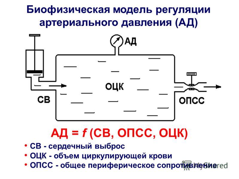 Биофизическая модель регуляции артериального давления (АД) СВ - сердечный выброс ОЦК - объем циркулирующей крови ОПСС - общее периферическое сопротивление АД = f (СВ, ОПСС, ОЦК)