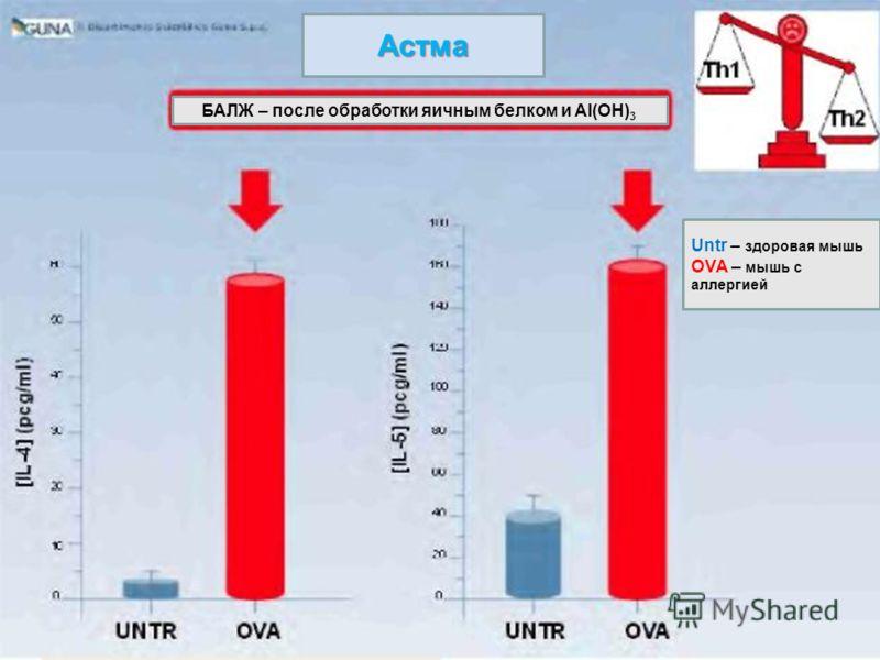 Астма БАЛЖ – после обработки яичным белком и Al(OH) 3 Untr – здоровая мышь OVA – мышь с аллергией