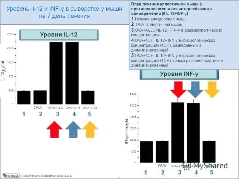Уровень Il-12 и INF-γ в сыворотке у мыши на 7 день лечения Уровни IL-12 Уровни INF-γ План лечения аллергичной мыши 2 противоаллергенными интерлейкинами одновременно (Il-L-12+INF-γ) 1.Нелеченая=здоровая мышь 2. OVA=аллергичная мышь 3.OVA+ALLO=IL-12+ I