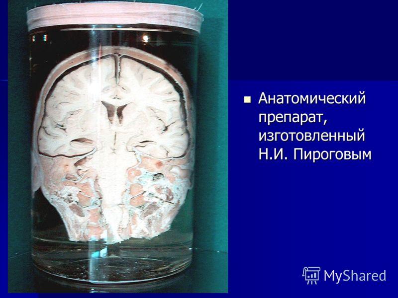 Анатомический препарат, изготовленный Н.И. Пироговым Анатомический препарат, изготовленный Н.И. Пироговым