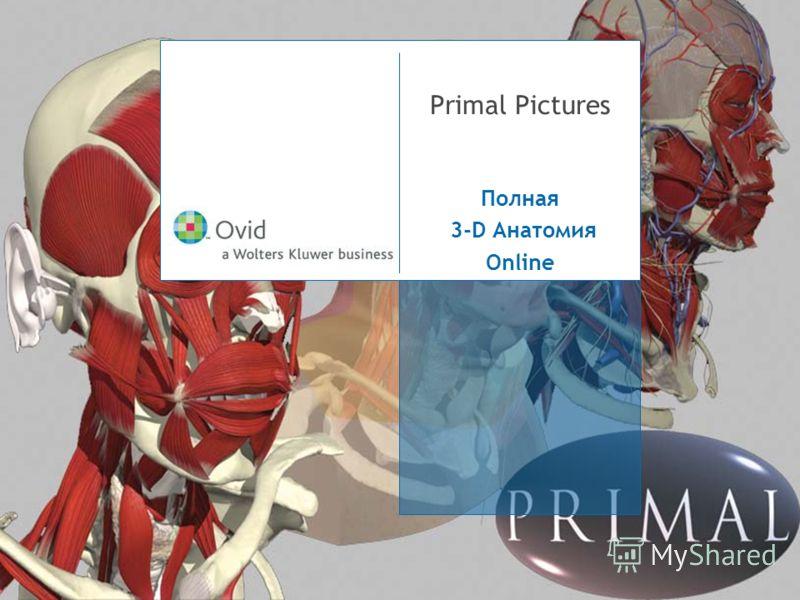 Primal Pictures Полная 3-D Анатомия Online