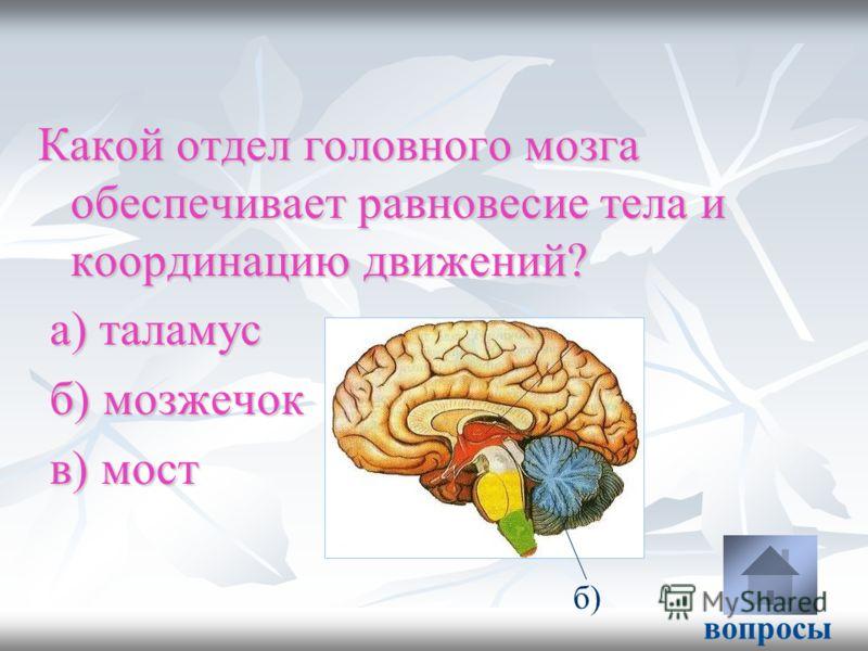 Какой отдел головного мозга обеспечивает равновесие тела и координацию движений? а) таламус а) таламус б) мозжечок б) мозжечок в) мост в) мост вопросы б)