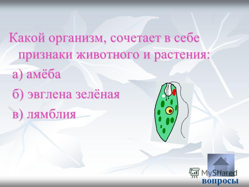 Какой организм, сочетает в себе признаки животного и растения: а) амёба а) амёба б) эвглена зелёная б) эвглена зелёная в) лямблия в) лямблия вопросы