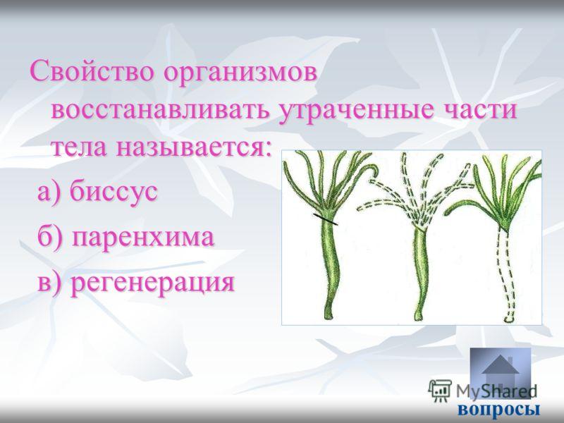 Свойство организмов восстанавливать утраченные части тела называется: а) биссус а) биссус б) паренхима б) паренхима в) регенерация в) регенерация вопросы