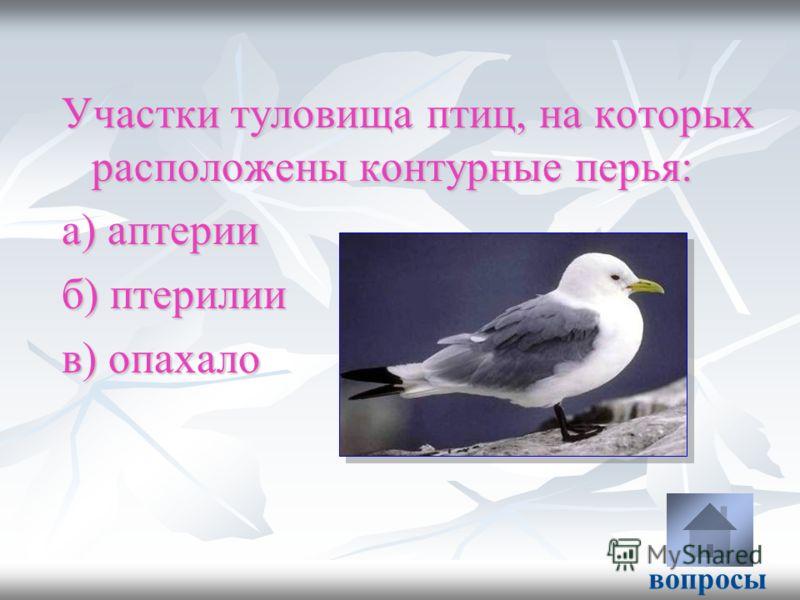 Участки туловища птиц, на которых расположены контурные перья: а) аптерии б) птерилии в) опахало вопросы