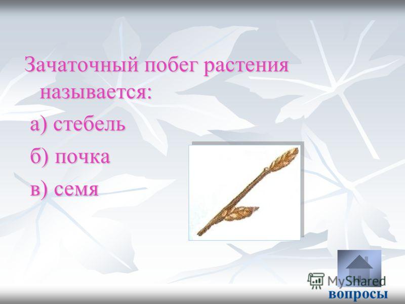 Зачаточный побег растения называется: а) стебель а) стебель б) почка б) почка в) семя в) семя вопросы