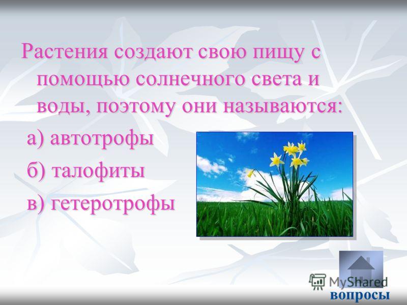 Растения создают свою пищу с помощью солнечного света и воды, поэтому они называются: а) автотрофы а) автотрофы б) талофиты б) талофиты в) гетеротрофы в) гетеротрофы вопросы
