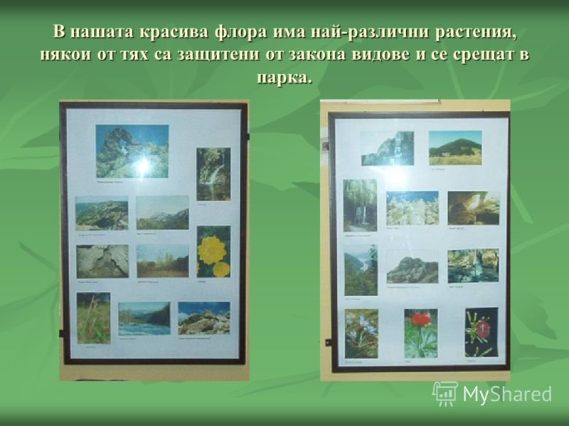 В нашата красива флора има най-различни растения, някои от тях са защитени от закона видове и се срещат в парка.