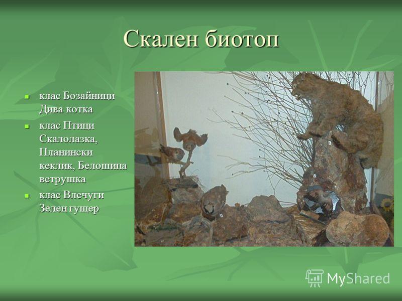 Скален биотоп клас Бозайници Дива котка клас Бозайници Дива котка клас Птици Скалолазка, Планински кеклик, Белошипа ветрушка клас Птици Скалолазка, Планински кеклик, Белошипа ветрушка клас Влечуги Зелен гущер клас Влечуги Зелен гущер