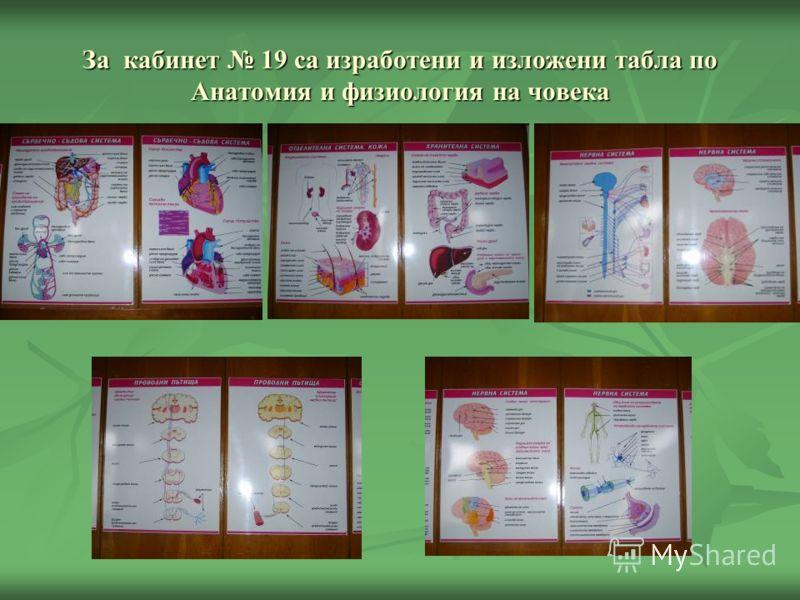 За кабинет 19 са изработени и изложени табла по Анатомия и физиология на човека
