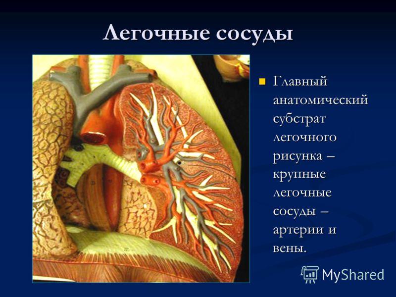 Легочные сосуды Главный анатомический субстрат легочного рисунка – крупные легочные сосуды – артерии и вены.