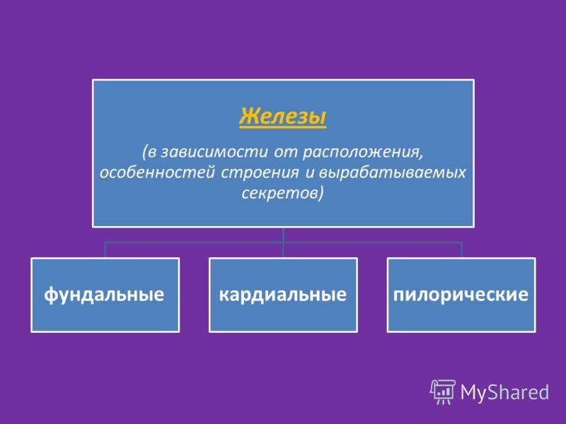 Железы (в зависимости от расположения, особенностей строения и вырабатываемых секретов) фундальныекардиальныепилорические