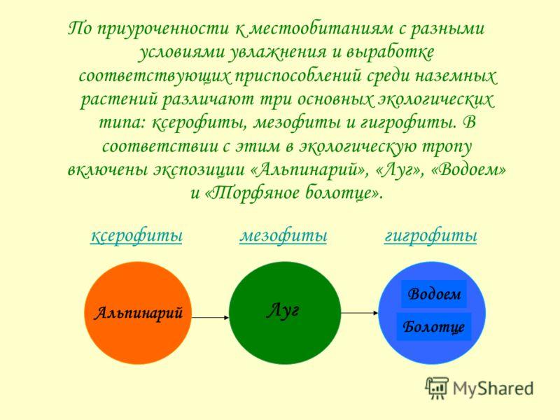 По приуроченности к местообитаниям с разными условиями увлажнения и выработке соответствующих приспособлений среди наземных растений различают три основных экологических типа: ксерофиты, мезофиты и гигрофиты. В соответствии с этим в экологическую тро