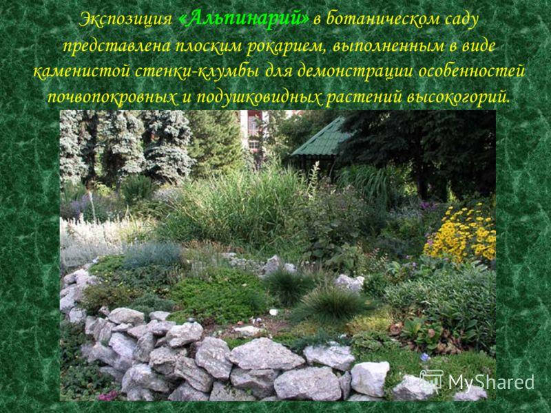 Экспозиция «Альпинарий» в ботаническом саду представлена плоским рокарием, выполненным в виде каменистой стенки-клумбы для демонстрации особенностей почвопокровных и подушковидных растений высокогорий.