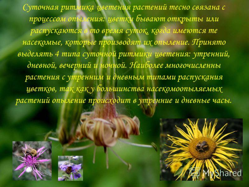 Суточная ритмика цветения растений тесно связана с процессом опыления: цветки бывают открыты или распускаются в то время суток, когда имеются те насекомые, которые производят их опыление. Принято выделять 4 типа суточной ритмики цветения: утренний, д
