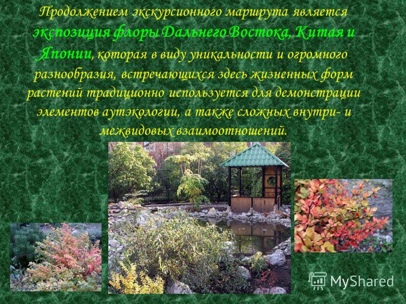Продолжением экскурсионного маршрута является экспозиция флоры Дальнего Востока, Китая и Японии, которая в виду уникальности и огромного разнообразия, встречающихся здесь жизненных форм растений традиционно используется для демонстрации элементов аут
