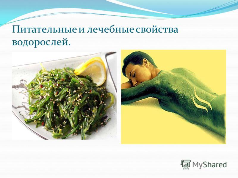 Питательные и лечебные свойства водорослей.