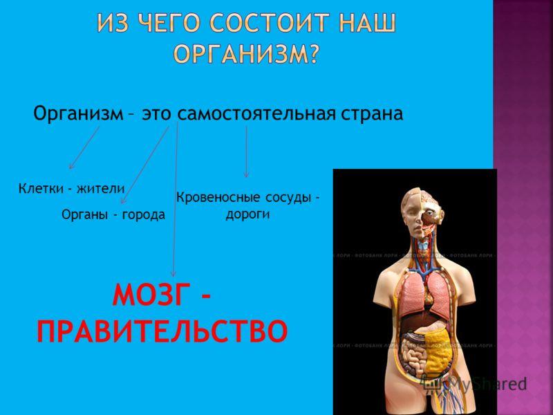 Организм – это самостоятельная страна Клетки - жители Органы - города Кровеносные сосуды - дороги МОЗГ - ПРАВИТЕЛЬСТВО