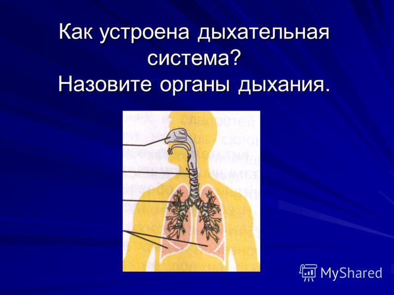 Как устроена дыхательная система? Назовите органы дыхания.