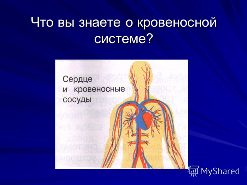 Что вы знаете о кровеносной системе?