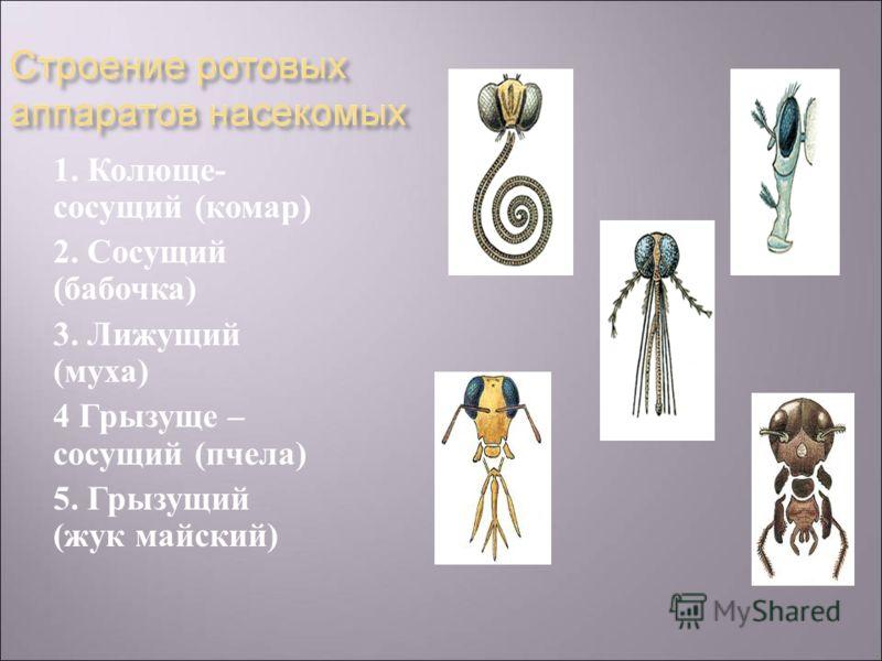 1. Колюще - сосущий ( комар ) 2. Сосущий ( бабочка ) 3. Лижущий ( муха ) 4 Грызуще – сосущий ( пчела ) 5. Грызущий ( жук майский )