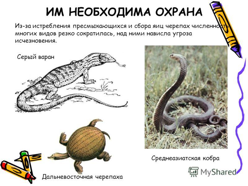 Из-за истребления пресмыкающихся и сбора яиц черепах численность многих видов резко сократилась, над ними нависла угроза исчезновения. ИМ НЕОБХОДИМА ОХРАНА Серый варан Дальневосточная черепаха Среднеазиатская кобра