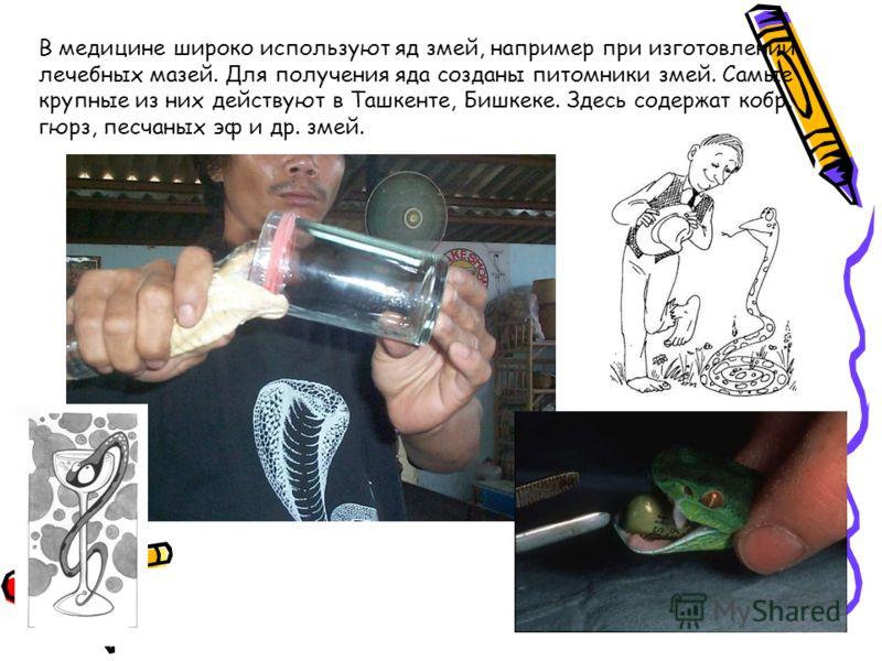 В медицине широко используют яд змей, например при изготовлении лечебных мазей. Для получения яда созданы питомники змей. Самые крупные из них действуют в Ташкенте, Бишкеке. Здесь содержат кобр, гюрз, песчаных эф и др. змей.