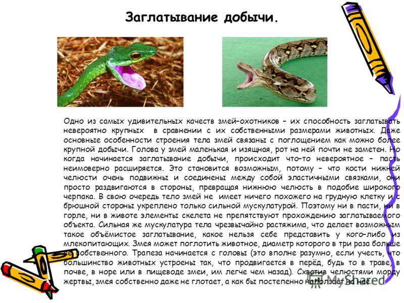 Заглатывание добычи. Одно из самых удивительных качеств змей–охотников – их способность заглатывать невероятно крупных в сравнении с их собственными размерами животных. Даже основные особенности строения тела змей связаны с поглощением как можно боле