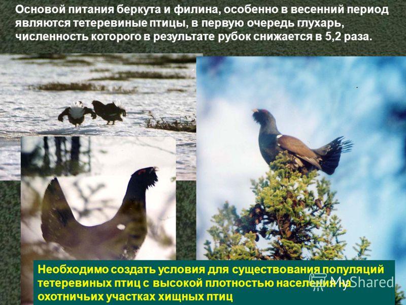 Основой питания беркута и филина, особенно в весенний период являются тетеревиные птицы, в первую очередь глухарь, численность которого в результате рубок снижается в 5,2 раза. Необходимо создать условия для существования популяций тетеревиных птиц с